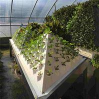 水培蔬菜 金字塔式 气雾培栽培塔