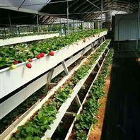 连栋塑料薄膜 无土栽培 草莓基质种植大棚