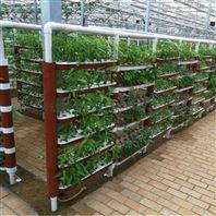 景观温室 无土栽培 立体种植 漏窗式水培架