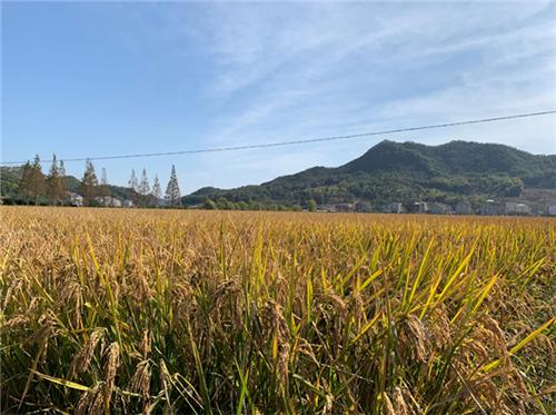 加快补贴进度、加大机具投入:河南省多举措保障三秋生产顺利进行