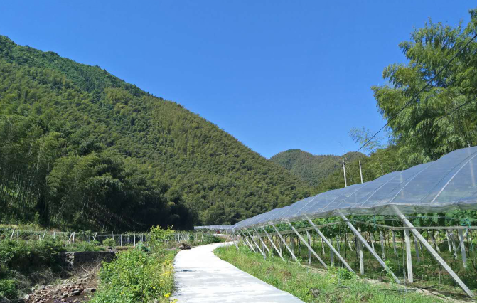 湖南省安排3000万资金对钢架大棚实施购置补贴