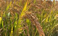 中国农民丰收节:丰收来之不易,农业机械化之路要坚定地走下去