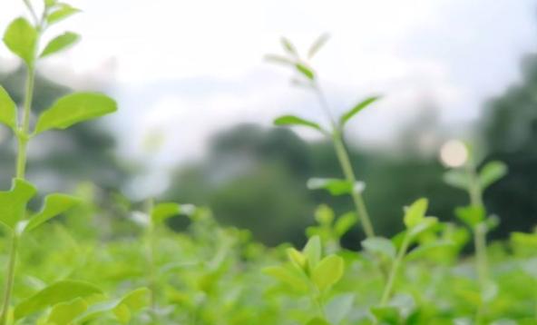 延边农机部门发布2020年秋季农机作业指导价格