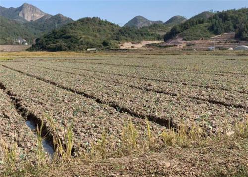 最高每亩80元,广西继续开展农机深松整地作业补助