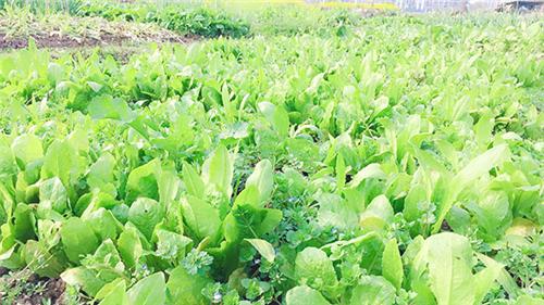 天津市农业农村委关于印发2020年农机购置补贴新产品补贴额一览表的通知