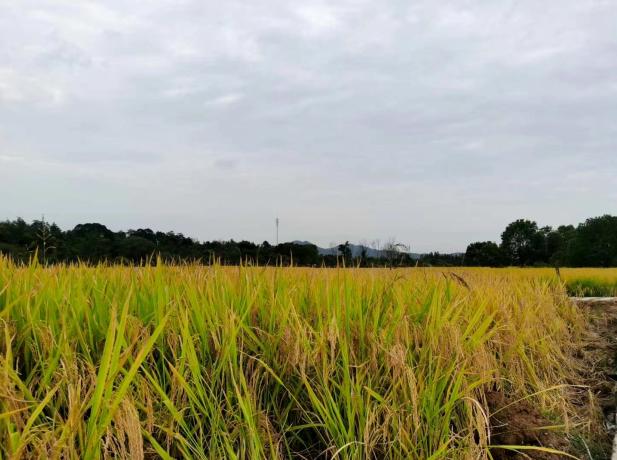 农业农村部:多项扶持政策支持新型经营主体高质量发展