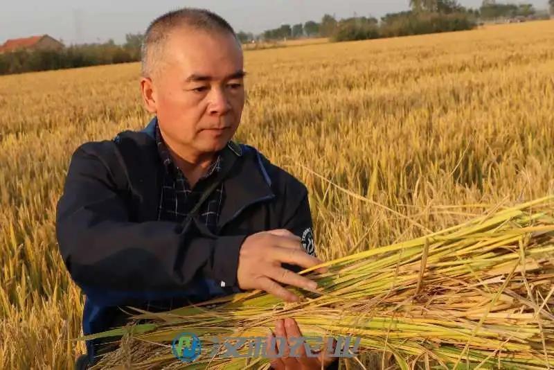 丰收季 | 汉和保驾护航的水稻增产啦!